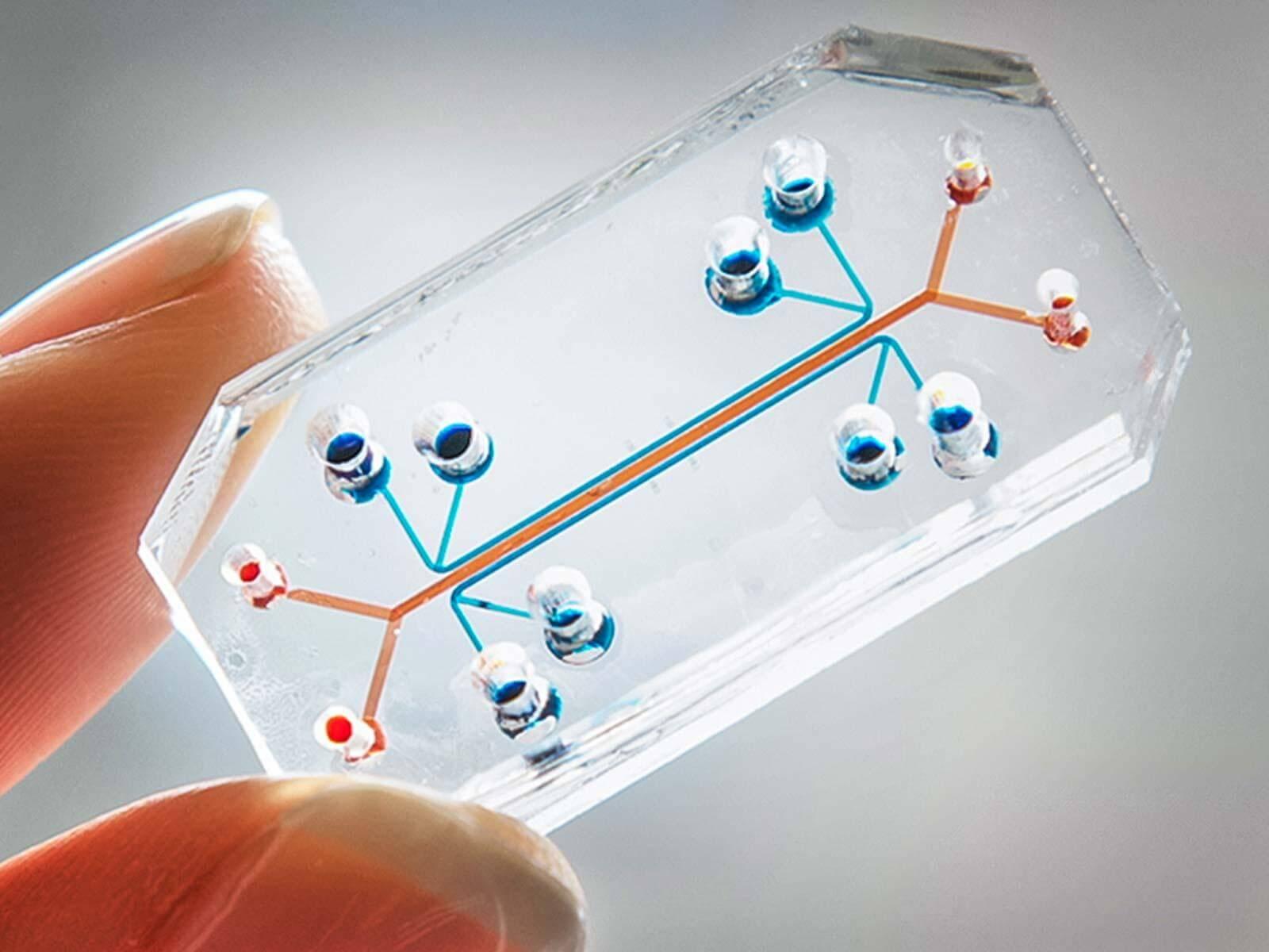 Чип со стволовыми клетками заменит медицинскую карту